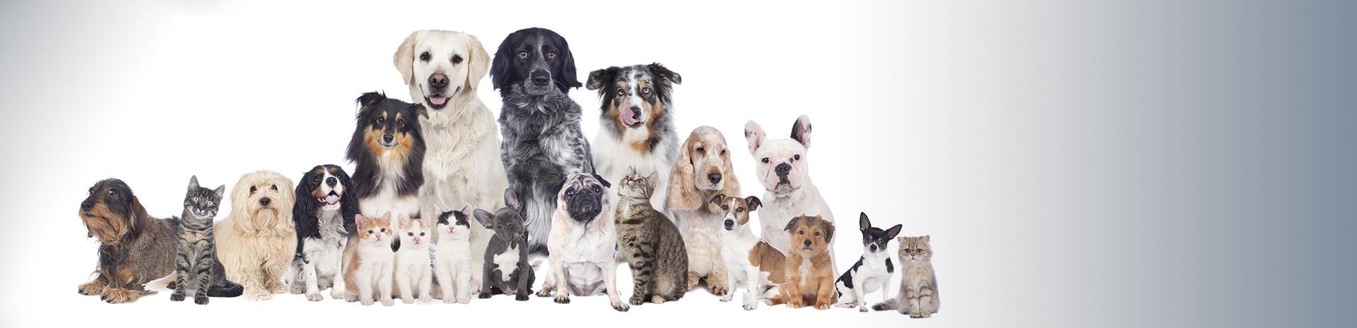Las mascotas